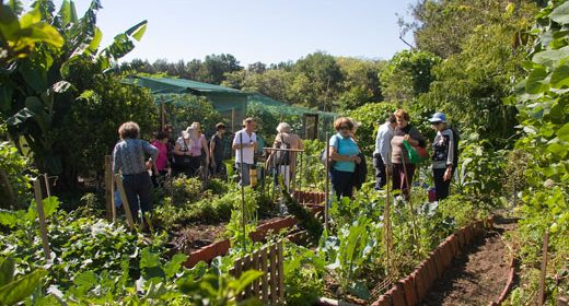 HOW TO MAKE A COMMUNITY GARDEN