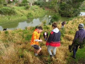 More Riverside Planting @ Puhoi Pioneers Memorial Park