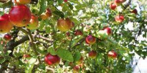 Orchard Planting @ Puhoi River Park